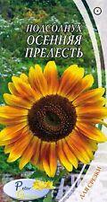 graines de Le tournesol décoratif Le charme d'automne - Helianthus annuus