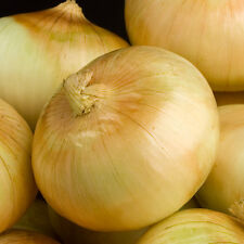 Yellow Sweet Spanish Onion Heirloom Seeds - Non-GMO -Untreated -Open Pollinated!