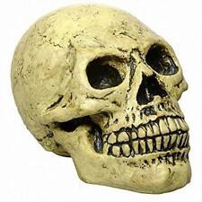Life Sized Foam Human Skull Halloween Party Decoration Prop