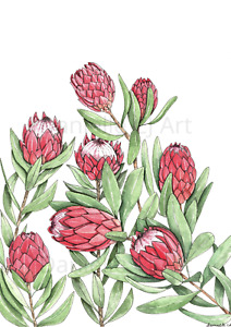 Original Watercolour Pink Ice Protea Painting - pink flower artwork