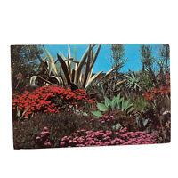 Southwest Flowering Desert Postcard