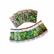 Assortment of 12 Culinary Herb Seeds - Non-Gmo   Grow Cooking Herbs: Parsley,.