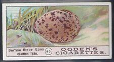 OGDENS-BIRDS EGGS 1908-#46- COMMON TERN EGG