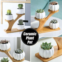 3 White Ceramic Succulent Plant Flower Pots Wooden Stand Within For Home Decor !