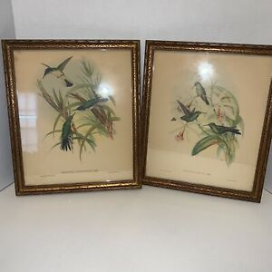 Vtg. 1946 Gould & H.C. Richter Handcolored Lithograph Set Of 2 Framed Bird Print