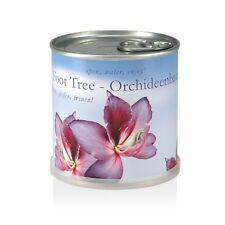 Blumen In der Dose - Orchideenbaum Von MacFlowers