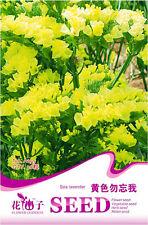 Original Package 30 Yellow Sea Lavender Seeds Myosotis Sylvatica Flowers A195