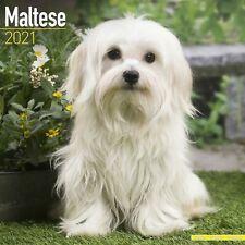Maltese Calendar 2021 Premium Dog Breed Calendars