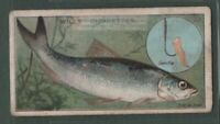 Bleak Fishing With Red Worm Bait Rod Reel c1910 Trade Ad Card