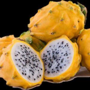 "2 Yellow Dragon Fruit Palora Starter Plants. Healthy 4-8"".  Lowest Price!"