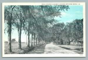 Spanish Moss Covered Highway NEW IBERIA Louisiana~Vintage Curteich Postcard 30s