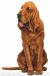 """BLOODHOUND Standing on ONE 16"""" Fabric Panel to Sew.Actual picture approx 8.5x11"""