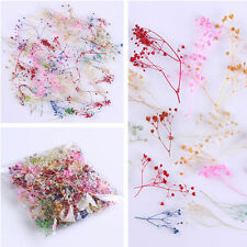 10pcs 3D Nail Art Decoration Dried Babysbreath Pretty Preserved Flower Diy L7