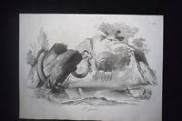 Incisione d'allegoria e satira Roma e Firenze Don Pirlone 1851