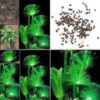 100stk Emerald Fluorescent Blumensamen Night Light Emitting Garten-Samen