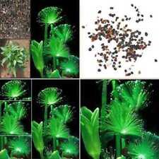 100stk Emerald Fluorescent Blumensamen Night Light Emitting Garten Samen