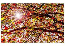 Unique handmade Autumn Shine greeting card with professional photograph print