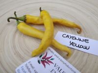 Yellow Cayenne Pepper 10+ seeds