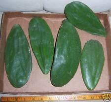 5 CACTUS PADS Opuntia Nopal HEALTHY 4 DIABETES & Food