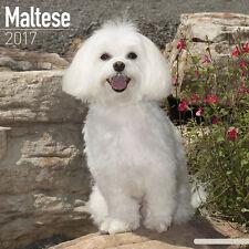 Calendrier 2017 - BICHON MALTAIS