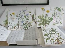 CIBA - Geiger Weed Tables A Synoptic Presentation of Flora With 160 Drawings