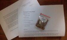 Paulownia elongata  ( Fast Growing Tree) -  1500  /7000 / 10000 Seeds + Gift
