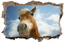 Pferd Himmel Wolken Wandtattoo Wandsticker Wandaufkleber D0474