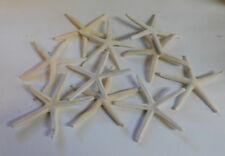 "4 BLEACHED WHITE FINGER STARFISH STAR FISH 2""+  WEDDING CRAFT ITEM # wsf2-4"