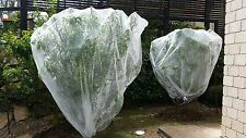 Vege Net 12m x 10m - Fruit fly / Insect exclusion