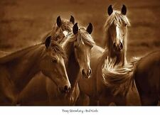 BAD GIRLS ART PRINT BY TONY STROMBERG beautiful blonde horse photography poster