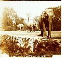 FRANCE Paris Jardin d'Acclimatation Éléphants, Photo Stereo Plaque Verre VR7L7
