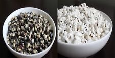 25 Black Popcorn Seeds! Makes Great Tasting Popcorn! Kids Love It! Comb. S/H!