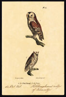 Antique Print-BIRD OF PREY-WOOD OWL-SCOPS-PLATE 13-Buffon-Burggraaff-1828