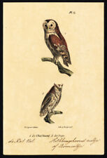 Antique Print-BIRD OF PREY-WOOD OWL-SCOPS-PLATE 13-Buffon-Burggraaff-1828