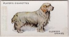 Clumber Spaniel Dog Canine Pet 1920s  Ad Trade Card