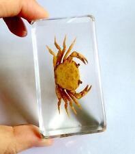 T-01 Vintage Crab Paperweight Cool Specimen Crafts