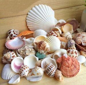 Mixed Beach Sea Shells Natural Craft Shell Mix Aquarium Wedding Table Decoration