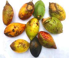 Terminalia Catappa Seeds Indian Almond Tree Garden Shade Tree 5 Seeds