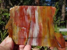 RFM - PETRIFIED WOOD Rainbow Arizona, Araucarioxylon arizonicum Gem Quality Slab
