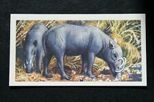 BABIRUSA   Wild Pig   Illustrated Vintage Card  #  VGC
