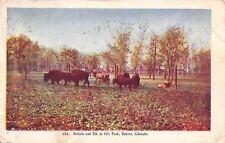 Denver Colorado~Buffalo And Elk In City Park~1908 Postcard