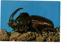 postcard:  RHINO BEETLE insect