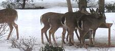 """Hurley Byrd 48"""" Ultra Large Free Standing Deer Feeder in Appalachian Hardwoods"""