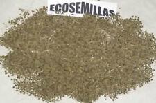 Perejil hoja lisa grande AROMATICA +de 1500 semillas ECOLÓGICAS COMPRA 2 ENVÍO 3