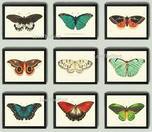 Unframed Butterflies Print Set 9 Prints Antique Beautiful Colorful Home Wall Art