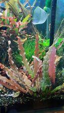 Rare aquarium plants.You get 3 plants.