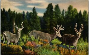 Three Deer in the Wilderness Vintage Postcard HH1-467
