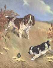 English Springer Spaniel - Vintage Dog Print - 1970 W. Dennis