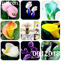 100 PCS Seeds Flowers Rare Bonsai Calla Lily Plants Garden Free Shipping 2019 N