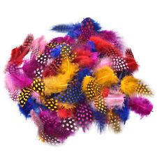100x/Set Guinea Fowl Feather Multi-Colored Nature Feather 4.5-10cm Decoration WB